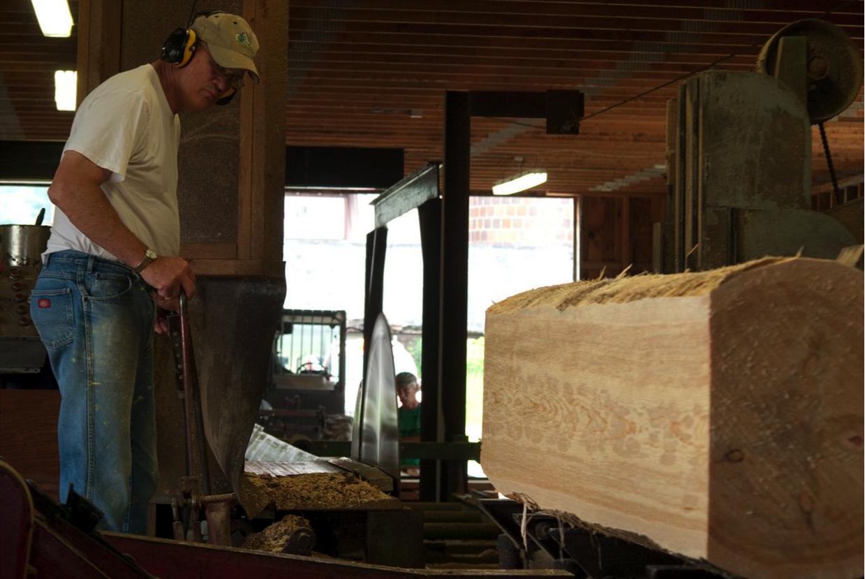 Jay Healy '68 sawing Kellogg pine at Hall Tavern Farm